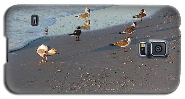 Seabirds Galaxy S5 Case by Deborah DeLaBarre