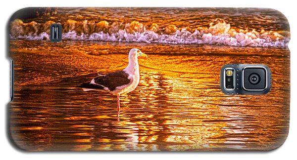 Seagul Reflects On A Golden Molten Shore Galaxy S5 Case