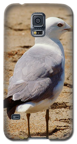 Seagull 3 Series 2 Galaxy S5 Case by Kelly Nowak