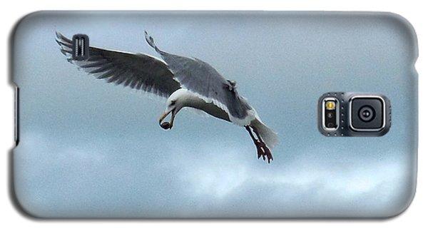 Seagull And His Breakfast Galaxy S5 Case by Karen Molenaar Terrell