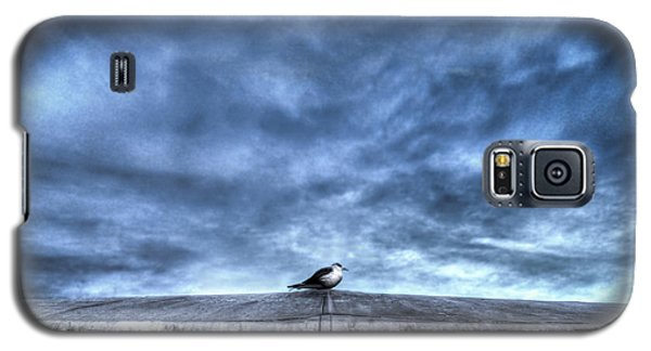 Seagull At Rest Galaxy S5 Case by Rafael Quirindongo