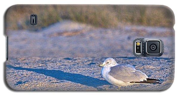 Seagull At Sunrise Galaxy S5 Case