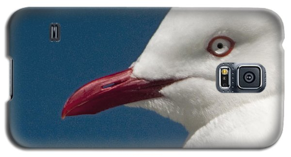Galaxy S5 Case featuring the photograph Seagull by Dennis Cox WorldViews
