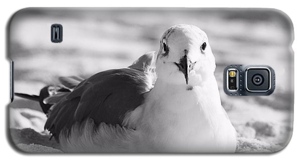 Galaxy S5 Case featuring the photograph Seagull by Elizabeth Budd