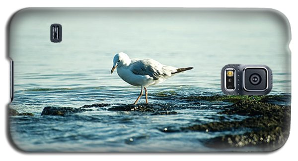 Galaxy S5 Case featuring the photograph Seagull Hunting by Yew Kwang