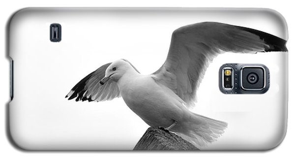Seagull In Black And White Galaxy S5 Case by Todd Soderstrom