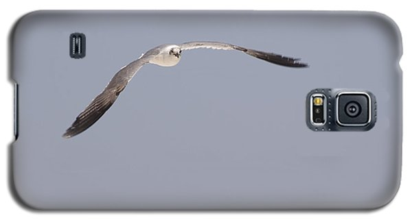Galaxy S5 Case featuring the photograph Seagull In Flight Against A Blue Sky by Charles Beeler