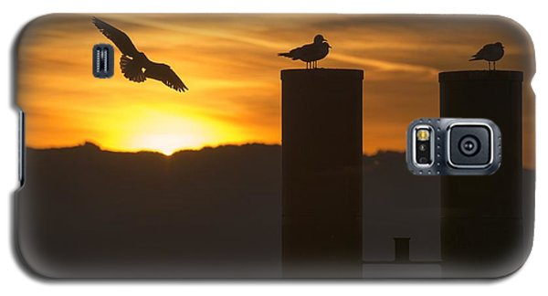 Galaxy S5 Case featuring the photograph Seagull In The Sunset by Chevy Fleet