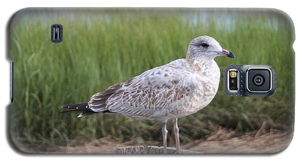 Galaxy S5 Case featuring the photograph Seagull by Karen Silvestri