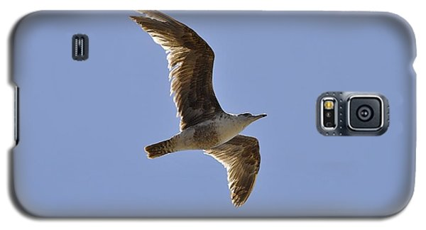 Seagull N Light  Galaxy S5 Case