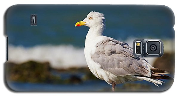 Galaxy S5 Case featuring the photograph Seagull On A Rock by Nick  Biemans