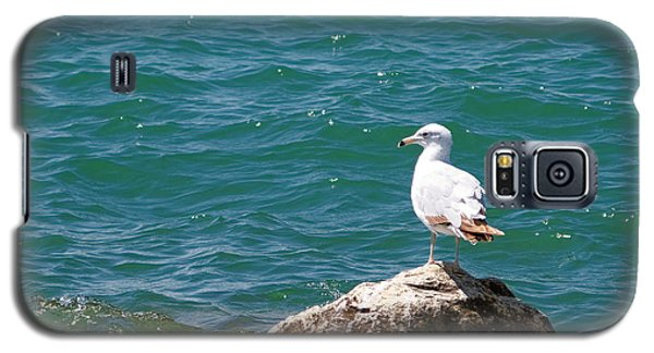 Seagull On Rock Galaxy S5 Case
