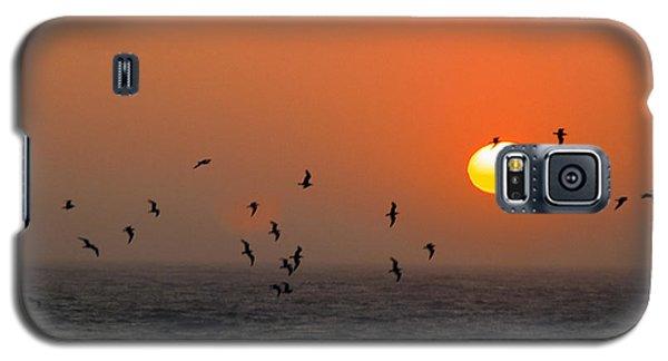 Seagull On Sunset Galaxy S5 Case