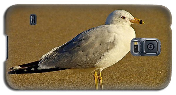 Seagull On The Beach Galaxy S5 Case