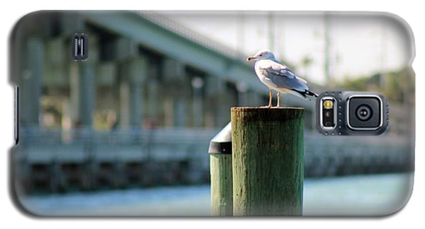 Seagull On The Dock Galaxy S5 Case by Nance Larson