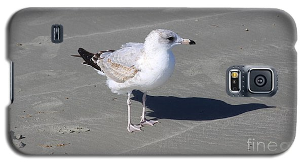 Seagull On The Hunt Galaxy S5 Case