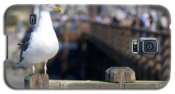 Galaxy S5 Case featuring the photograph Seagull by Robert  Aycock
