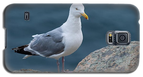 Seagull Galaxy S5 Case by Sebastian Musial