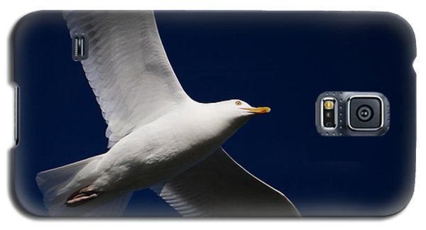 Seagull Underglow Galaxy S5 Case