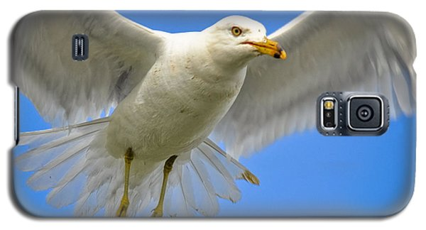 Galaxy S5 Case featuring the photograph Seagull Wings by Gina Savage