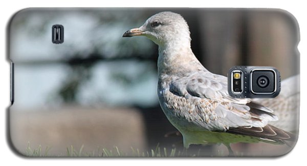 Seagulls 1 Galaxy S5 Case