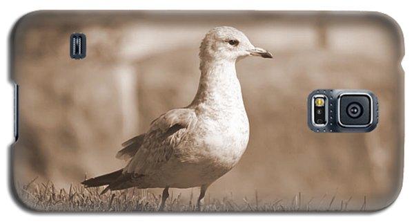 Seagulls 2 Galaxy S5 Case