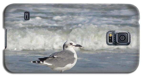 Seagulls At Fernandina 6 Galaxy S5 Case