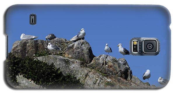 Seagulls Galaxy S5 Case