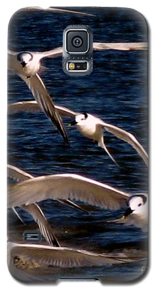 Galaxy S5 Case featuring the photograph Seagulls In Flight 2 by Patricia Januszkiewicz