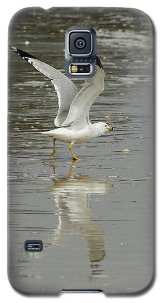 Seagulls Takeoff Galaxy S5 Case