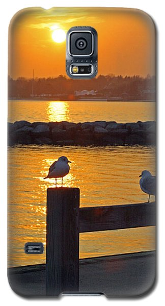 Seaguls At Sunset Galaxy S5 Case
