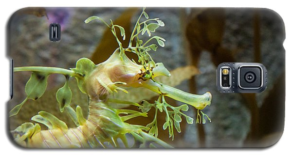 Galaxy S5 Case featuring the photograph Seahorse by Mike Lee