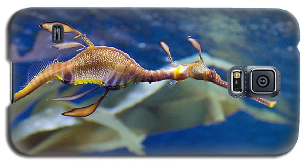 Seahorse See Horse Galaxy S5 Case
