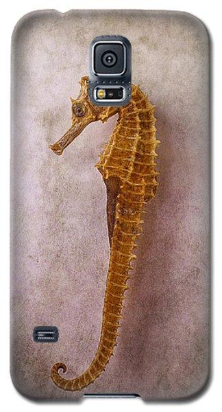 Seahorse Still Life Galaxy S5 Case by Garry Gay