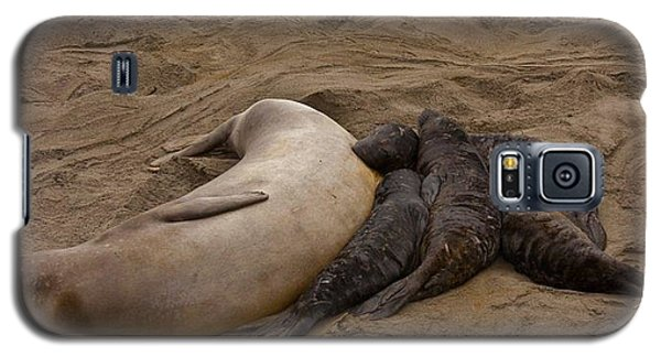 Seal And Pups Galaxy S5 Case