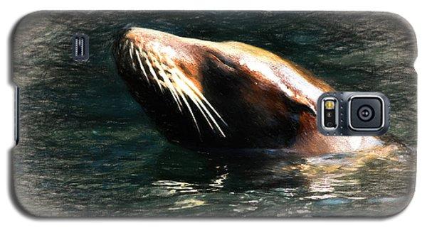 Seal Dreams Galaxy S5 Case by Terry Cork