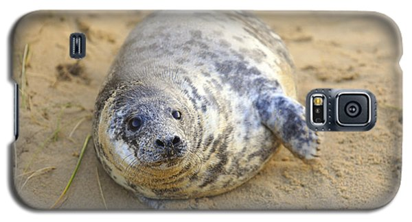 Seal Pup On The Beach Galaxy S5 Case