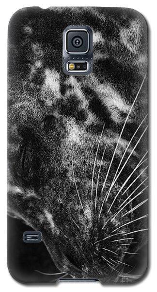 Seal Solitude Galaxy S5 Case