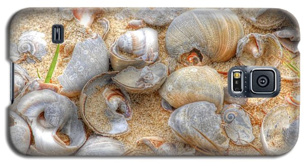 Seashell 01 Galaxy S5 Case by Donald Williams