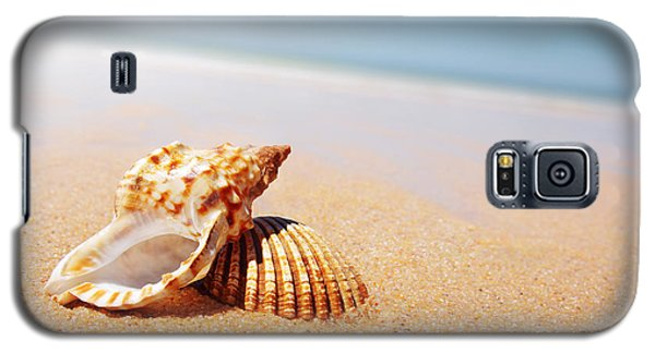 Seashell And Conch Galaxy S5 Case