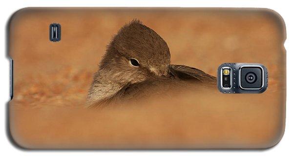 Galaxy S5 Case featuring the photograph Seashell Solitude by John F Tsumas