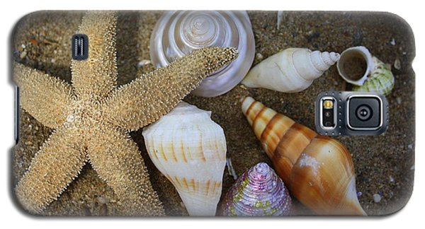 Seashells And Star Fish Galaxy S5 Case by Dora Sofia Caputo Photographic Art and Design