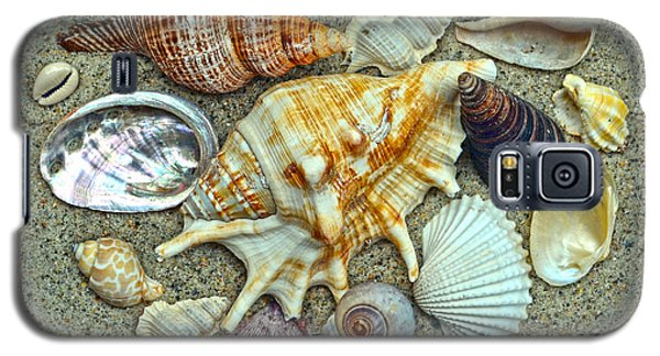 Seashells Collection Galaxy S5 Case by Sandi OReilly