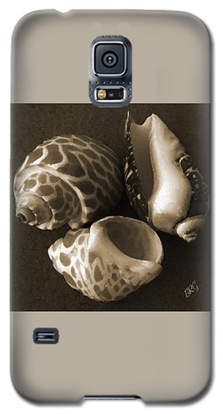 Seashells Spectacular No 1 Galaxy S5 Case by Ben and Raisa Gertsberg