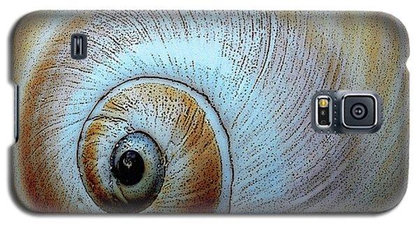 Seashells Spectacular No 36 Galaxy S5 Case