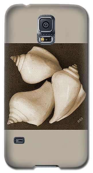 Seashells Spectacular No 4 Galaxy S5 Case