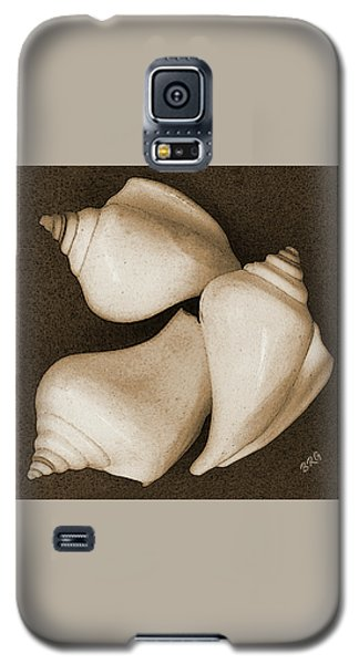 Seashells Spectacular No 4 Galaxy S5 Case by Ben and Raisa Gertsberg