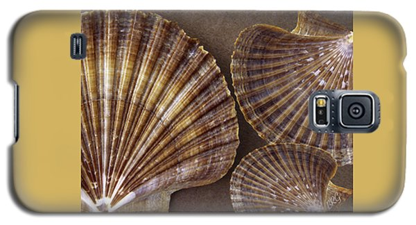 Seashells Spectacular No 7 Galaxy S5 Case