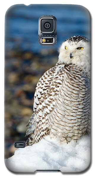 Winter At The Beach Galaxy S5 Case by Stephen Flint