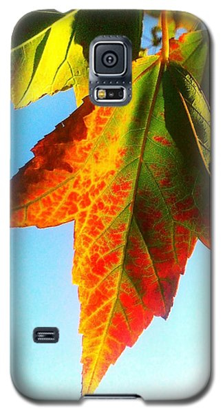 Galaxy S5 Case featuring the photograph Season's Change by James Aiken
